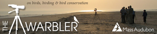 The Warbler - Mass Audubon eNewsletter birds, birding, bird cons