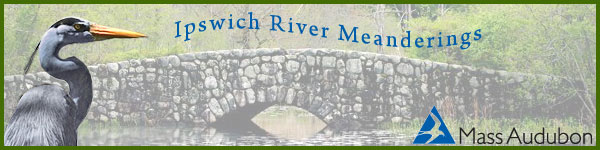 Ipswich River Meanderings banner