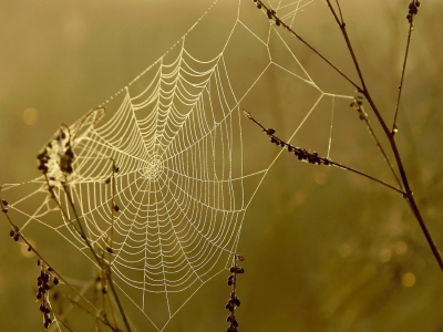 Orb Web_iStock_October 2012_use.jpg