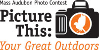 Picture This Photo Contest 2011