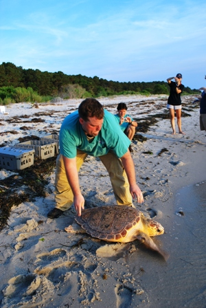 Sea Turtle Release by NEAQ photo Connie Merigo