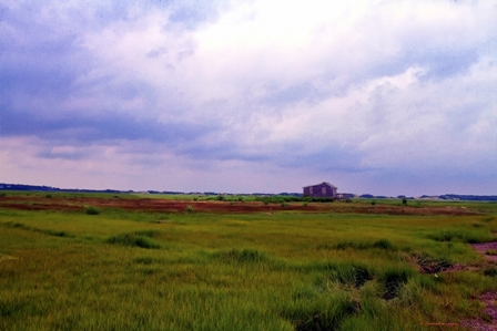 Barnstable Great Marsh copyright CJ Gregory