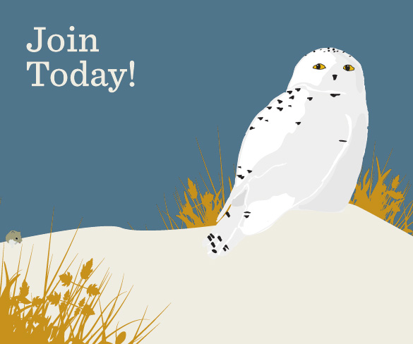 Join Mass Audubon Today