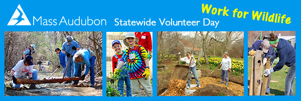 Statewide Volunteer Day
